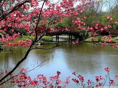 Proljeće, cvijeće i jezero download besplatne pozadine slike za desktop