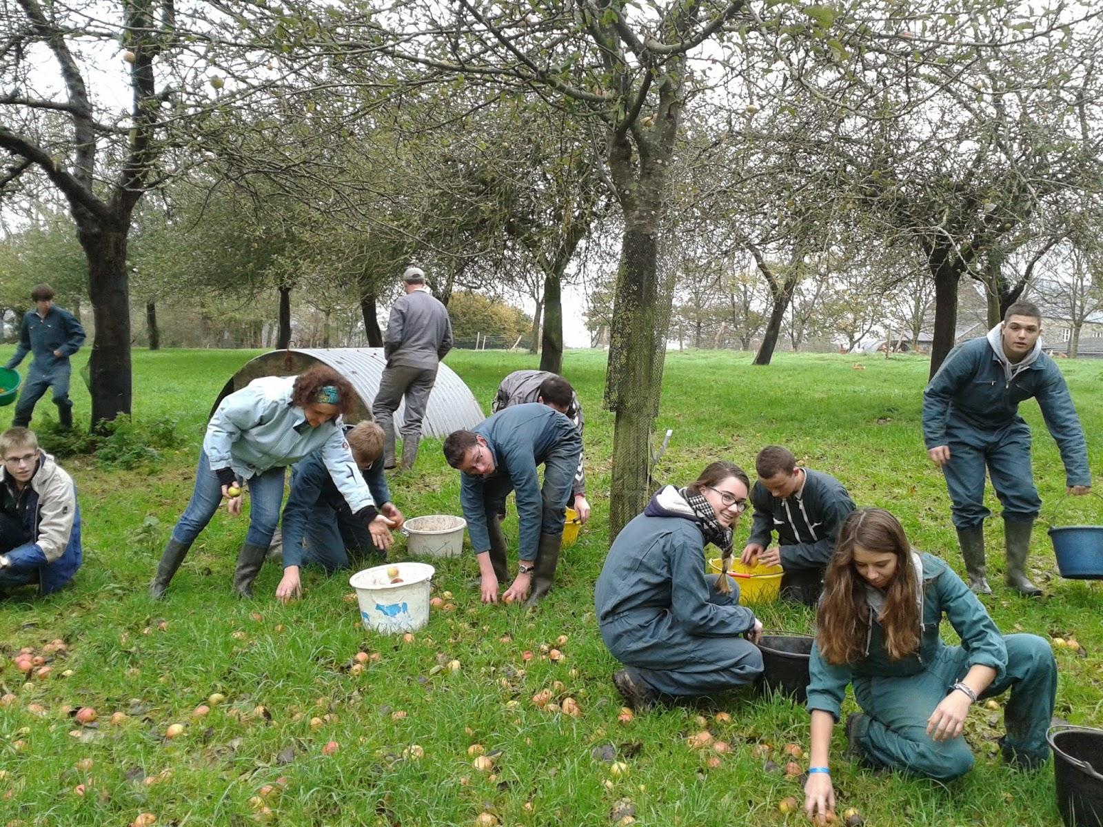 Grise la normande et les agris coutan ais se font bios - Machine pour ramasser les pommes ...