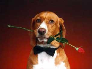 immagini san valentino glitter