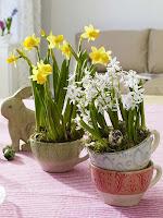 Пролетни цветя в чаени чаши