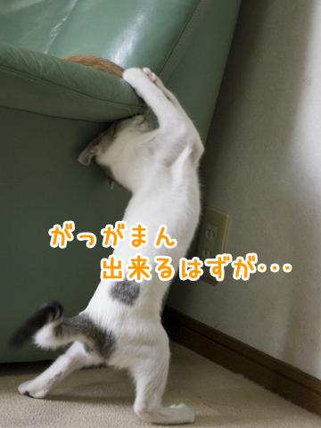 立ってる猫