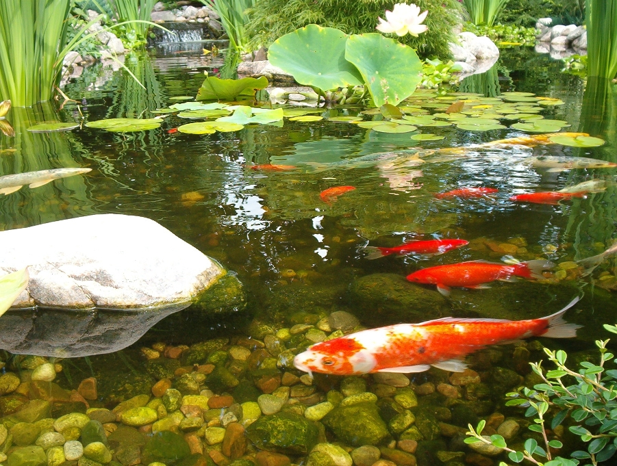 Natural organic solutions from effective environmental for Round koi pond