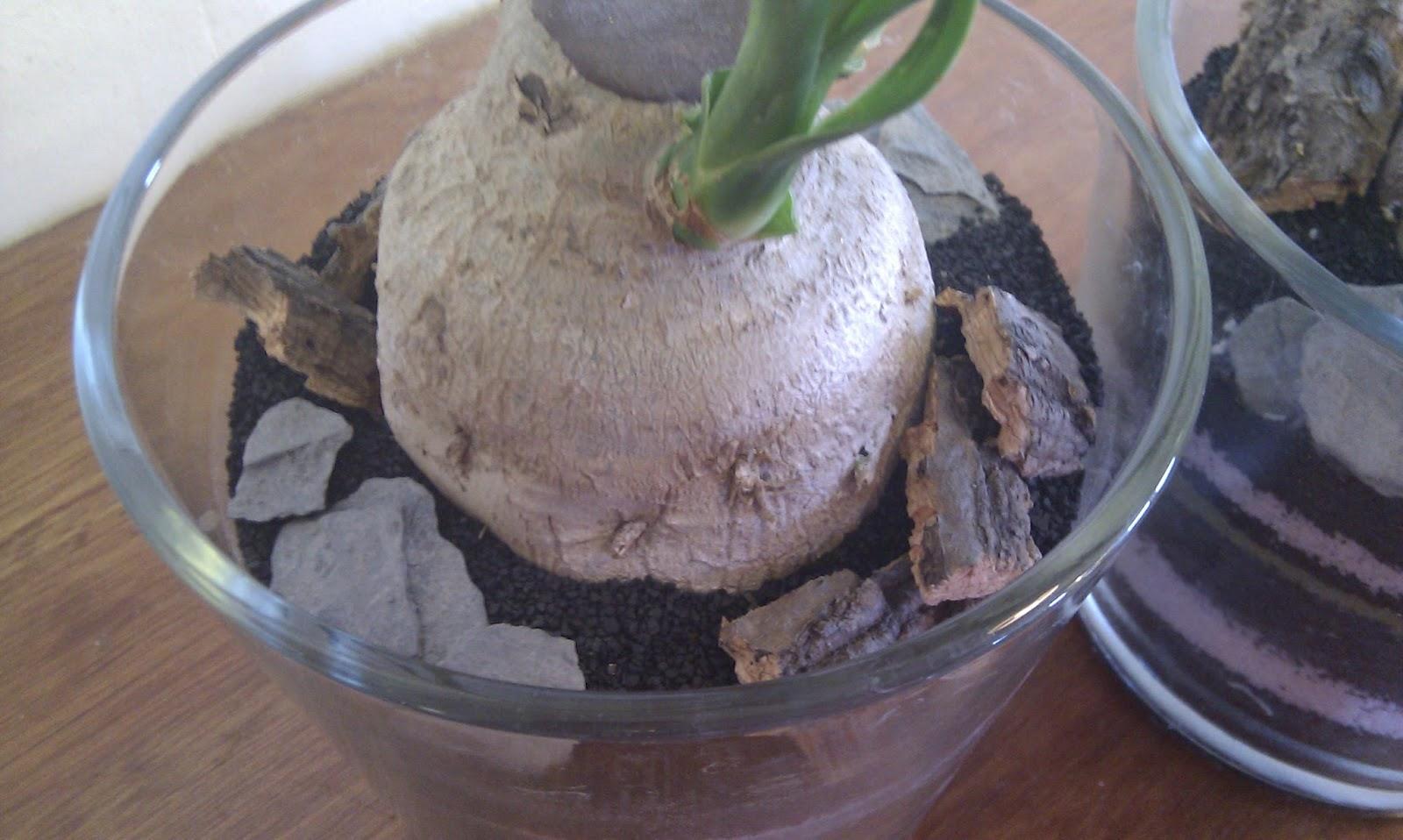 Plante styling i glas potte.
