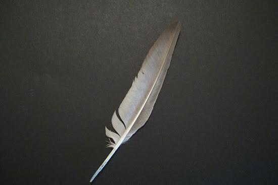 Que significa soñar con plumas de ave