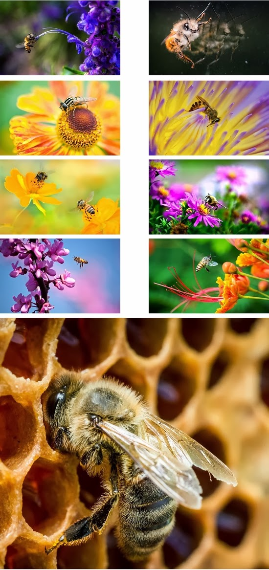 Bee Animal Theme For Windows 7 And 8 8.1 9