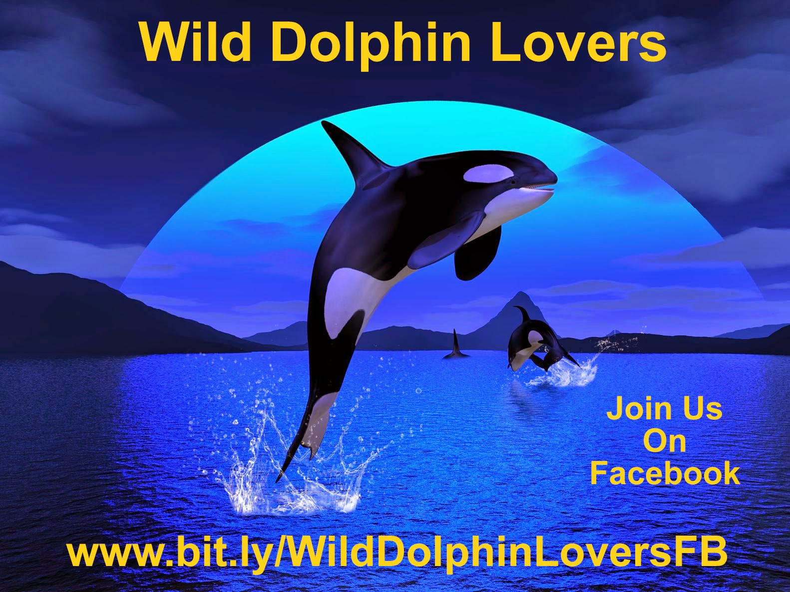 Wild Dolphin Lovers FB Group