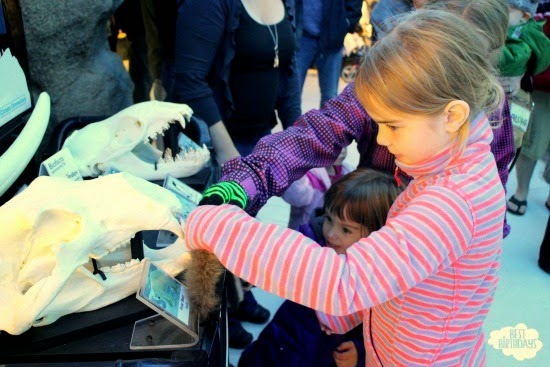 Real Party: Penguin Party at the Calgary Zoo  |  Best Birthdays
