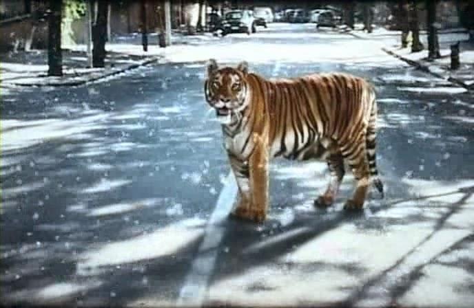 """Favoloso Riflessioni di Anna: """"La tigre e la neve"""": storia di un amore  LW14"""
