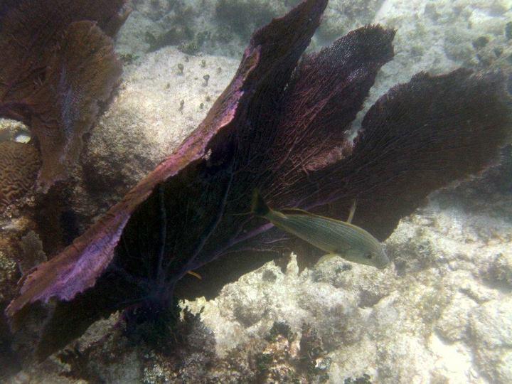 Barrera de Coral Mexicana