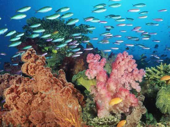 Marine Sea Creatures Through Marine Biology Fish