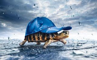 3D Turtles HD Animal Wallpaper