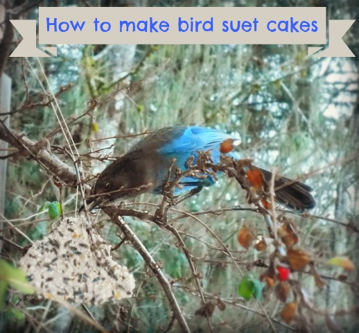 How to make bird suet cakes