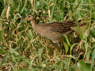Maarof Bani Harun Al Jazair Burung Sita Dan Ayam Ayam Vol Ii