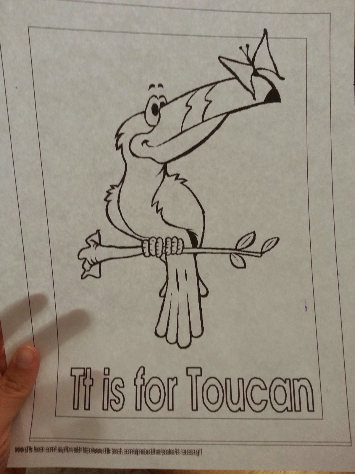 T Is For Toucan Coloring Sheet Printable