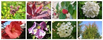 Arbustos de hoja caduca en fotos