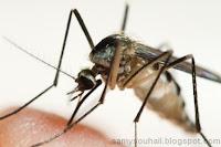 """مكيف هواء لطرد حشرة """"أنثى"""" الناموس والوقاية من الملاريا"""