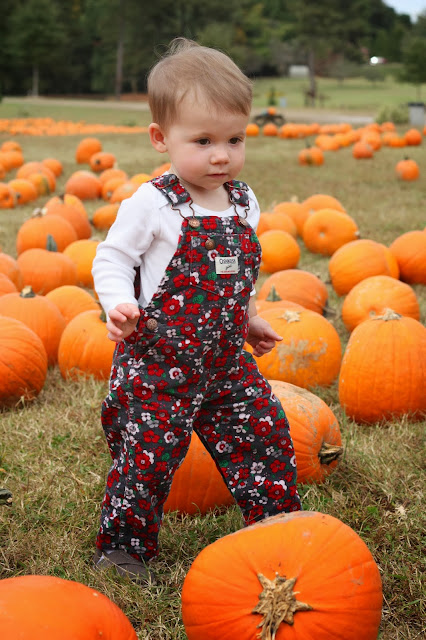 Madeline romping in the pumpkin patch