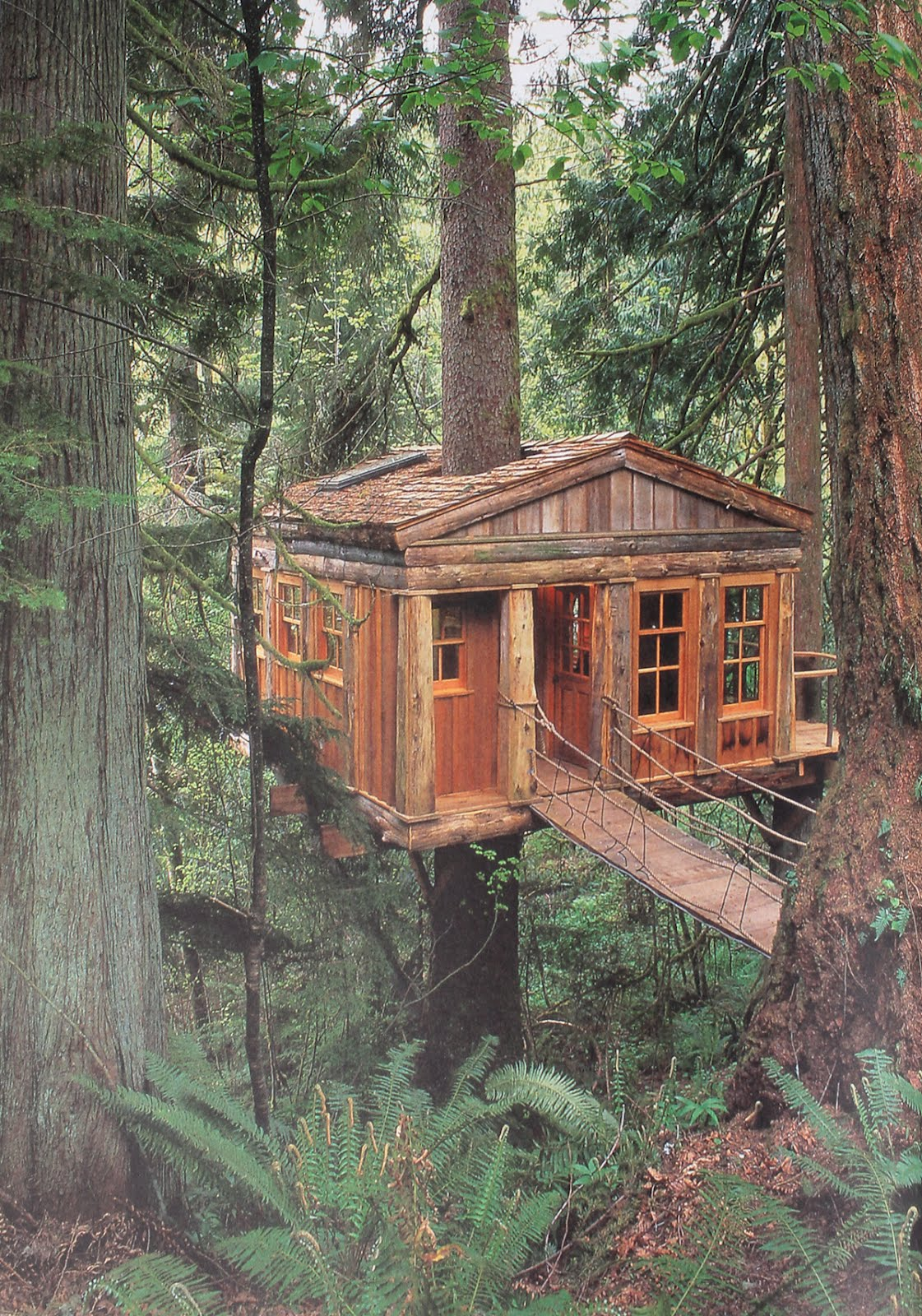 Terrierman's Daily Dose: A Cabin in the Woods