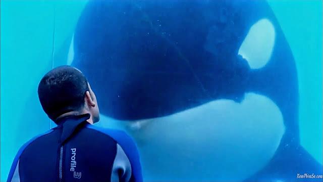 Cá Mập Đen heyphim maxresdefault1