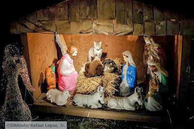 foto kucing di rumah natal 04