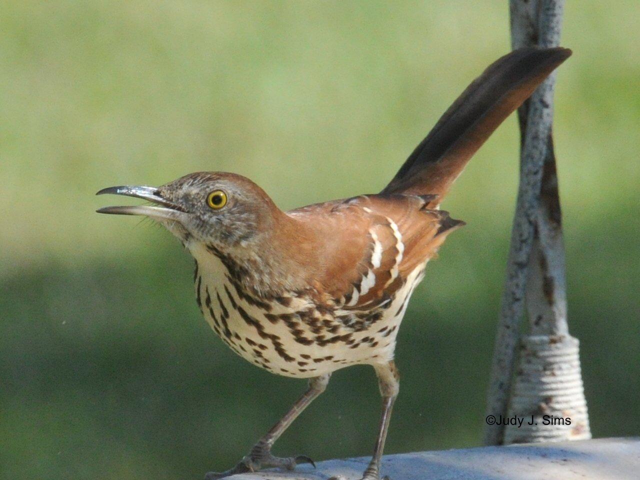 East Texas Birder on The Move: More Birds of My Backyard!