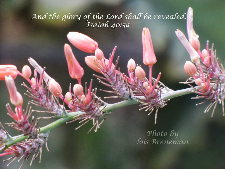 Pink Flower - Isaiah 40:5a
