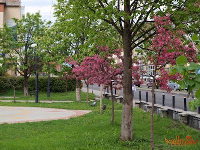 Toplita - Centru - Parc