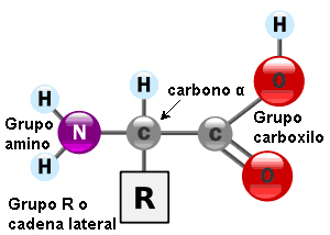 Estructura general de los aminoácidos