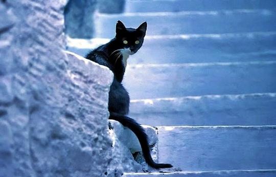 Cat from Chora, Mykonos