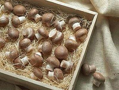 Braune Champignons in Kiste