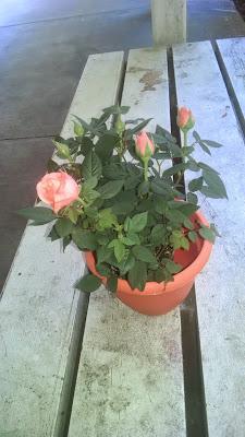 Happiness: Orange flowers, orange pot