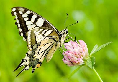 Butterfiles Son Güzel Resimler 2.013