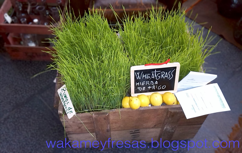 hierba de trigo en cajon de madera