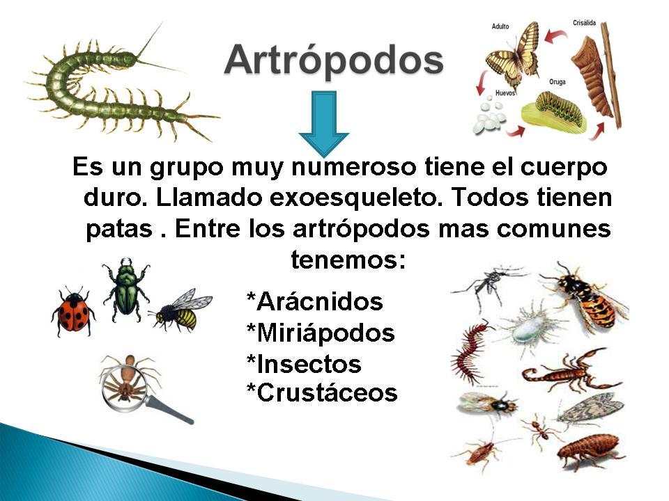 Dibujos Para Colorear De Animales Artropodos ~ Ideas ...