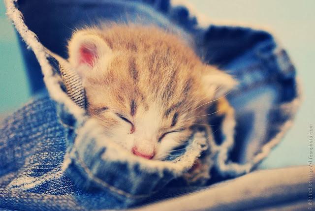спящий котёнок