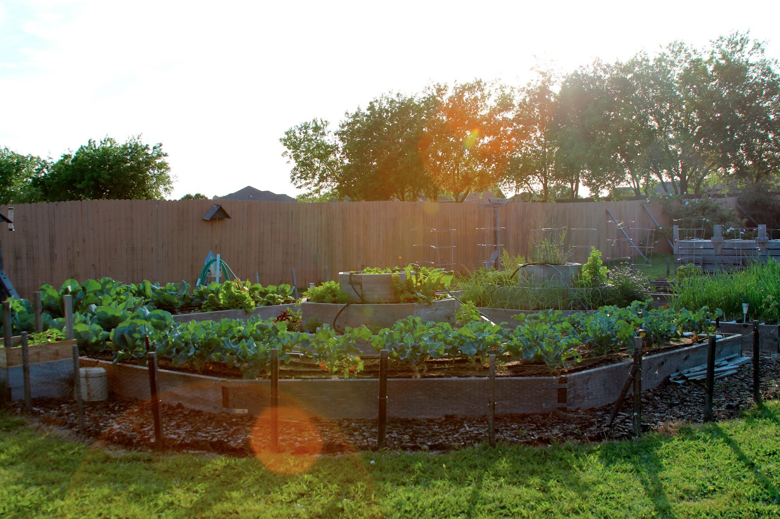 Rainbow Magic Sparkle Butterfly : Update on Vegetable Garden - Early ...