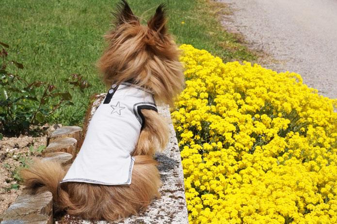 T-shirt prêt-à-porter : Isabelle Courtenay, créatrice mode pour chien