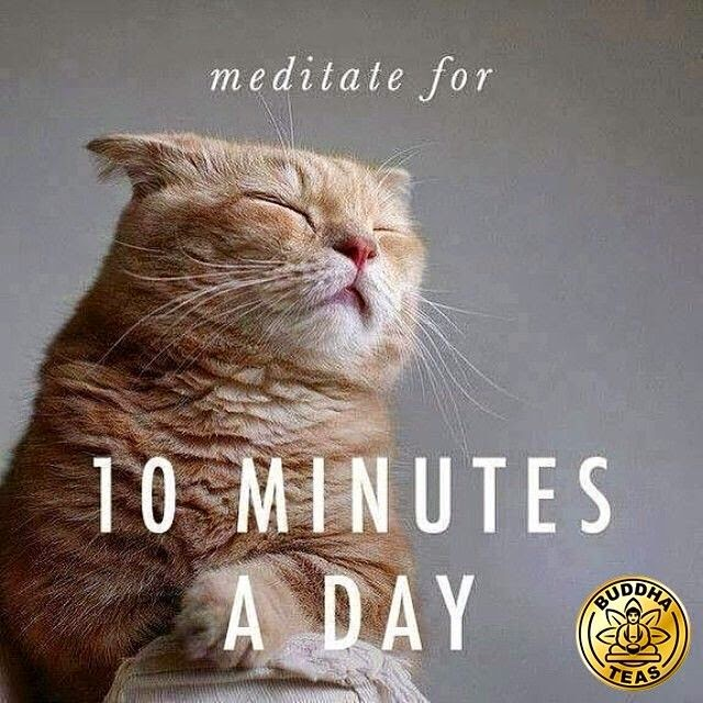 """Meditate for 10 minutes a day."" ~ Unknown; Picture of a cat with it's eyes closed. Buddha Teas"