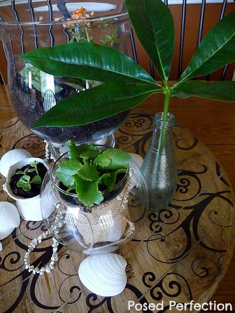 seashells and succulents