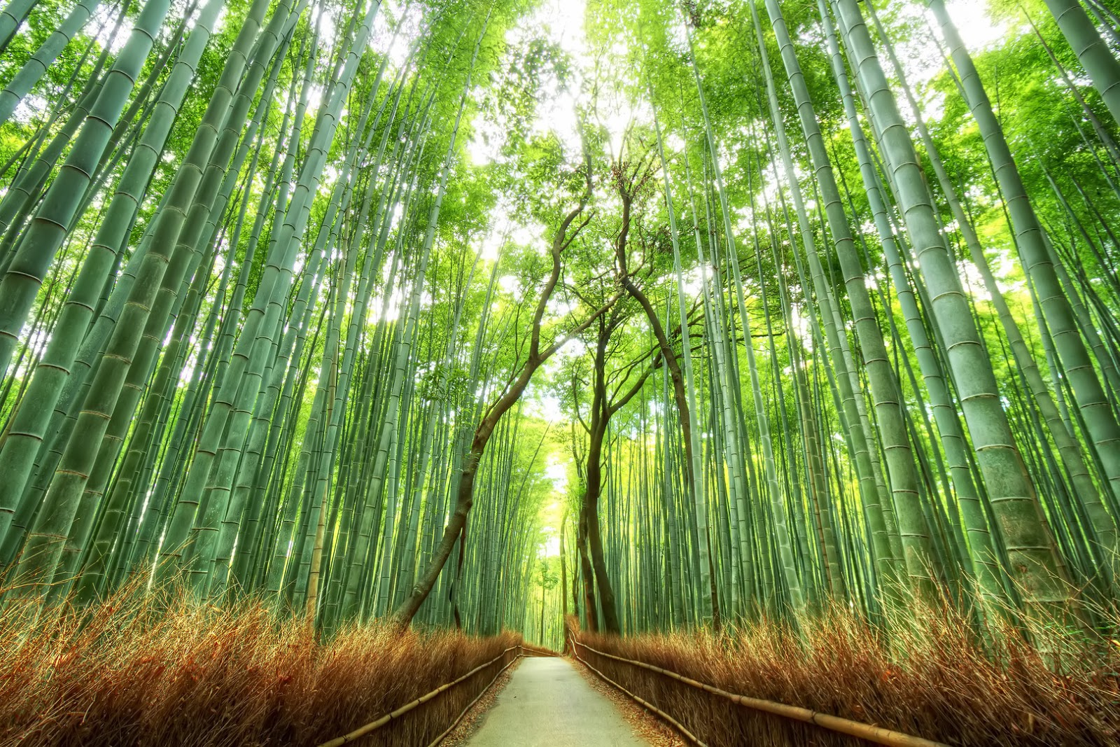 Bamboo Forest, USA