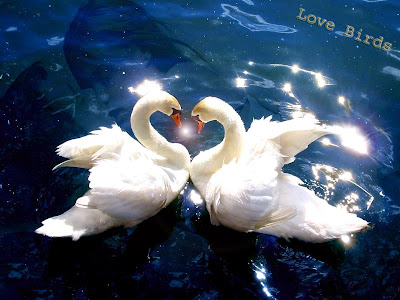 birds-pictures-falling-in-love