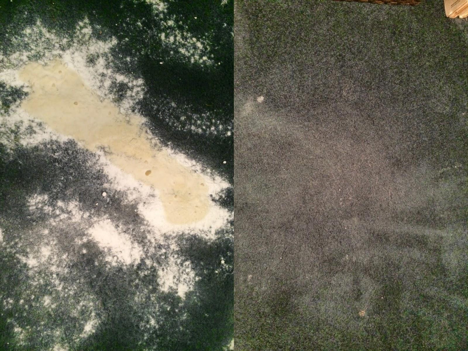 Citrus Carpet Cleaning Images Household Eliminator