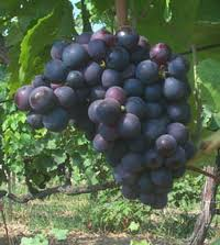 recipe with grapes