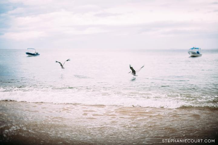 fishing boat and pelicans in Bahía de Banderas