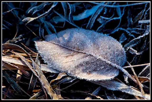 Nova Scotia; Frost