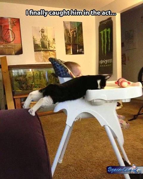 funny cats pics humor
