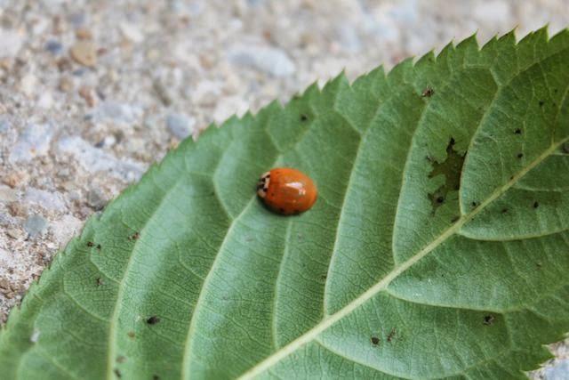 A Grouchy Ladybug via www.happybirthdayauthor.com