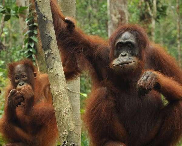 Taman Nasional Tanjung Puting 3