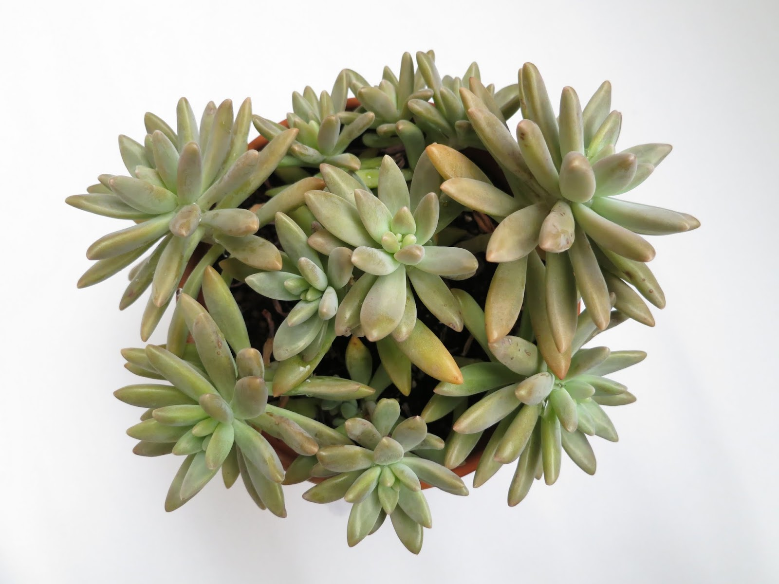Succulents-lover 阿多肉