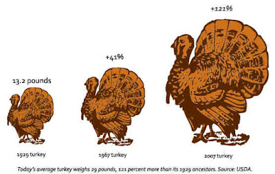 heritage-turkey-size